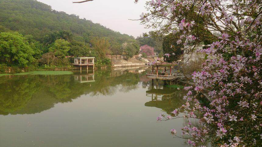 Shenzhen Xianhu Botanical Garden